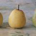 Gyümölcsfák, gyümölcsök