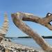 Driftwood art from Hungary by tamas kanya(rattlesnake)