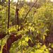 kusza őszi kert 2