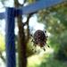 Pók-háló