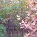 Kosd utcai erdő