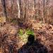 ébredező természet az erdőben