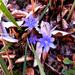 májvirág