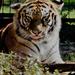 Album - Magán Zoo