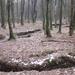 19 Kozár-Borzó-patak a Kőszegfalvi erdőben