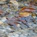 Album - Víz, tópart, esőcseppek