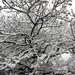 047 Téli erdő