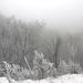 049 Téli erdő