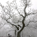 050 Téli erdő