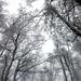 058 Téli erdő