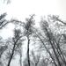 061 Téli erdő