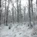 062 Téli erdő