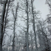 064 Téli erdő