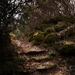 Sejtelmes kis ösvény