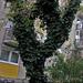 lakótelepi fa