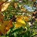 bogyók és levelek