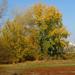 patak parti fák