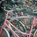 Biciklierdő