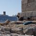Rodosz város - rodoszi macskák Costa kirándulóhajóval