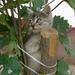 Macska fa
