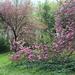 20170417-66-Zirc-Arboretum