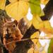 """""""Mint a mókus fenn a fán.."""""""