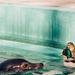 BP - Állatkert 4