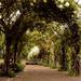 Album - Hyde Park / Kensington Gardens, 2015