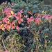 Őszi színek a parkban