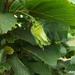 Gyümölcsök, termések, kerti képek