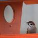 Album - Madarak a madáretetőknél