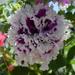 Virágaim 7