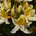Rododendronok között 25