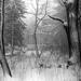 csillagdai tél