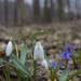 Tavaszi társak.