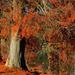Album - A tó ősszel