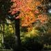Arborétum 256