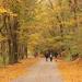 Kirándulás ősszel.