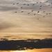 Repülő madarak a naplementében