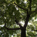 Faágak levelek napsugár free