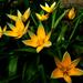 Április Évszakok Tavasz
