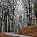 Zúzmarás erdő