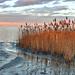 Fertő tó Tél Jég Nád