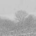 Sűrűn hull a hó