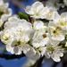 Április Évszakok Tavasz 17