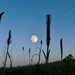 Holdkelte Nyár