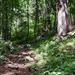 Erdő Nyár Alpok