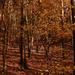 Őszi erdő
