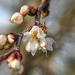 Tavasz a télben Január