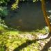 Erdei séta / A fekete a tóban ebihalak